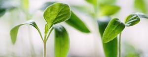 plantas 300x115 - ¿Por qué los lideres de las PYMES deben desarrollar a sus personas?